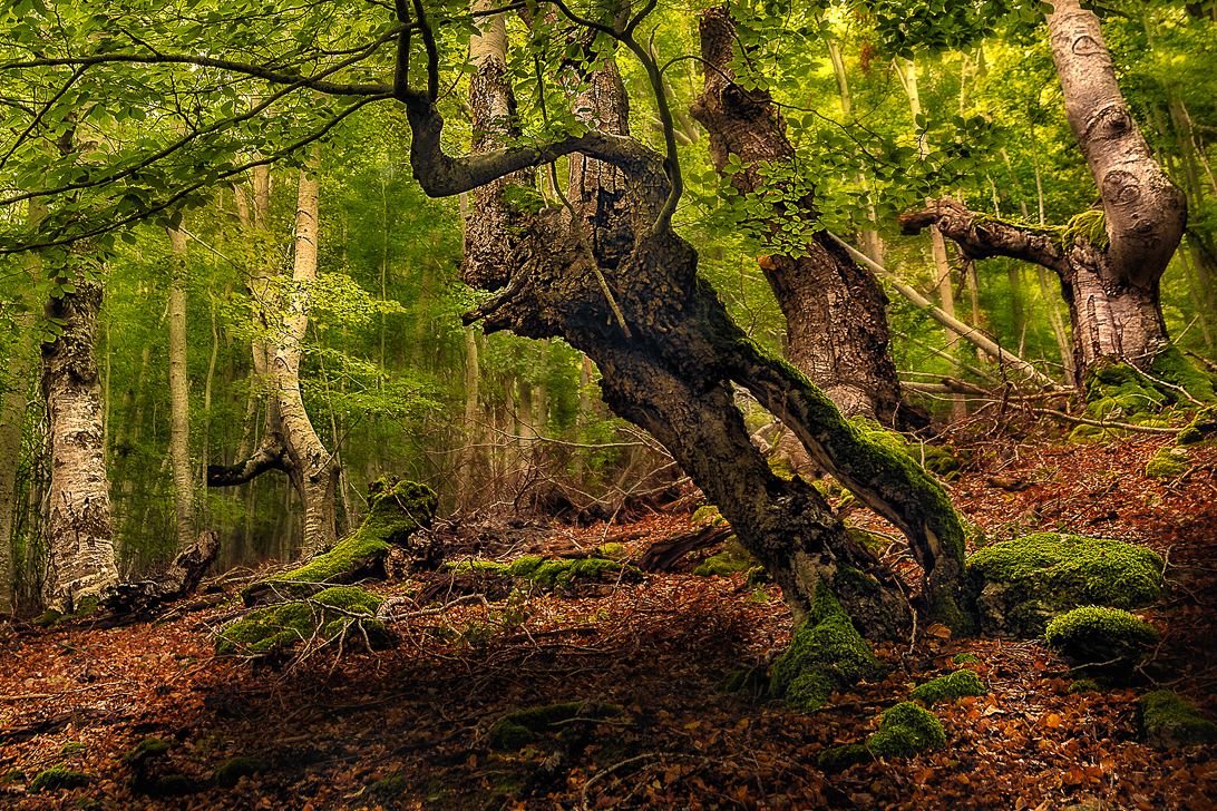 3.El alma del bosque